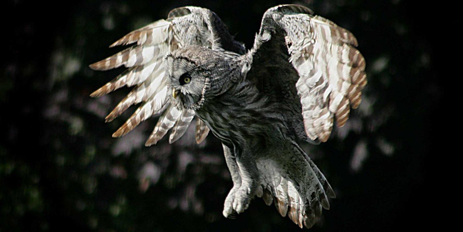 Winter Owl Evenings!